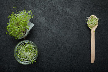 Fresh microgreen of vegetable salad on a black background, space for text.