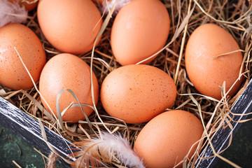 Raw chicken eggs in box