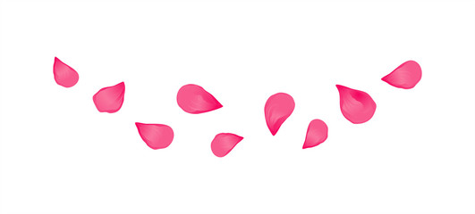 Purple Pink flying petals isolated on White background. Sakura Roses petals. Vector