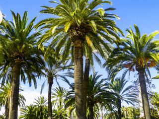 Prehistoric looking palm forest near the beach of Cartagena.Andalusia, Spain