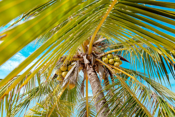 coconut palm tree close up wild angle