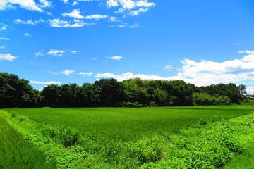 田と川原のい風景32