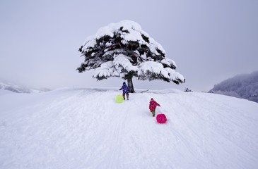 雪山でそり遊びをする子供たち