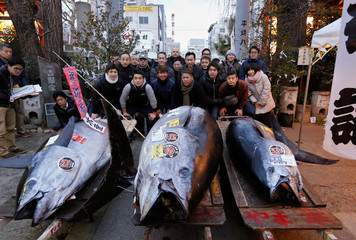 People pose for photos with a 405 kg bluefin tuna (C) and other tuna fish at a shrine outside Tsukiji fish market in Tokyo