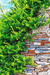 The use of Larch in landscape design