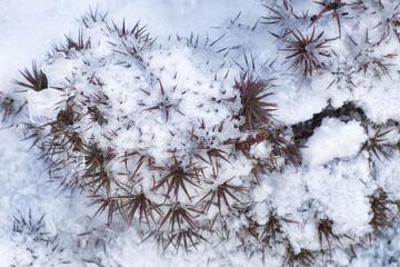 Snow melting Tasmania