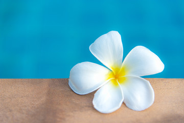 Plumeria flowers spa near swimming pool, relax and healthy care.  Healthy Concept