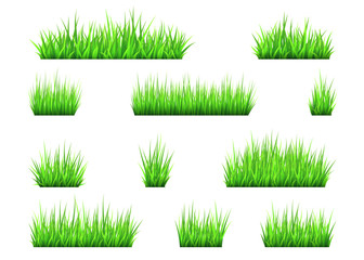 Green grass and bushes isolated on white background.