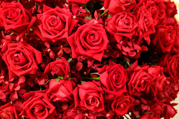 Natural red roses background. Selective focus.