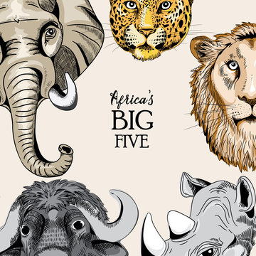 Collection of animals from Africa's big five. Vector illustration on light light brown background