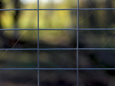 metal net, spider web, nature background