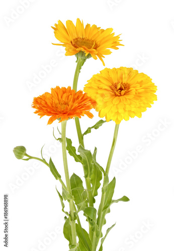 Bouquet of marigold flowers on a white background stock photo and bouquet of marigold flowers on a white background mightylinksfo