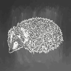 Realistic hedgehog drown on chalkboard. Vector illustration on blackboard. Animal sketch. EPS 10. Vector drawing of animal for greeting card, invitation, print, web project. Hand drawn illustration
