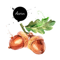Hand drawn watercolor painting of acorn isolated on white background. Vector llustration of nut for your design