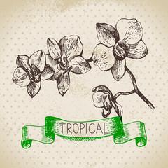 Hand drawn sketch tropical plants vintage  background. Vector illustration