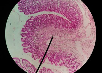 Close up human cells with microscope.