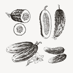 Vintage illustration of ink drawn cucumbers