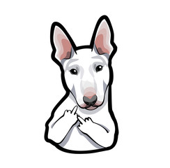 dog bull terrier on white background with middle finger.
