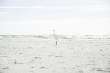 USA, Florida, Sarasota, Siesta Key, heron on beach