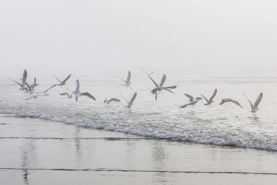 USA, Washington, Seattle, Long Beach, flying birds on beach