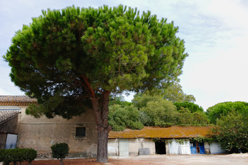 Lifestyle of Provence - details and elements of french houses and architecture in small medirval village