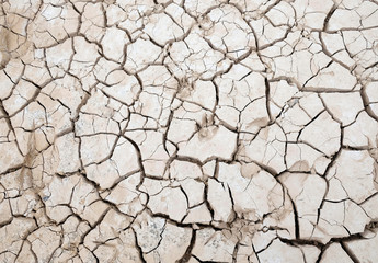 Animal footprints are stamped on the dried out ground of the partially empty Contreras water reservoir during a severe drought near the southeastern town of Utiel