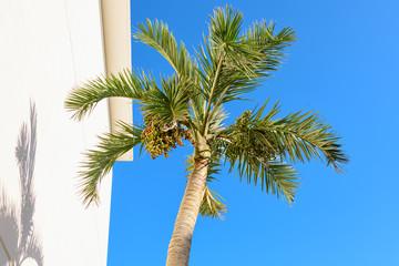 Palm tree in blue sky