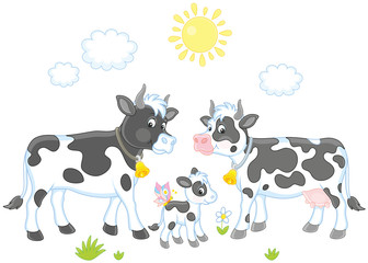 A spotted cow, a bull and a small calf, a vector illustration in cartoon style