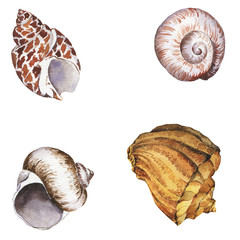 Set of cockleshells on white background. Hand drawn watercolor illustration.