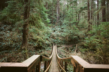 wooden bridge leading into green forest