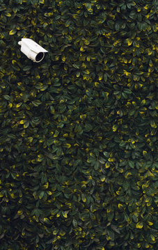Surveillance camera on facade covered with liana plant.