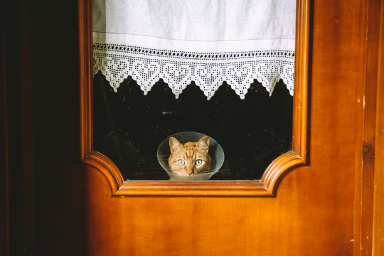 Orange cat with medical cone looking through window