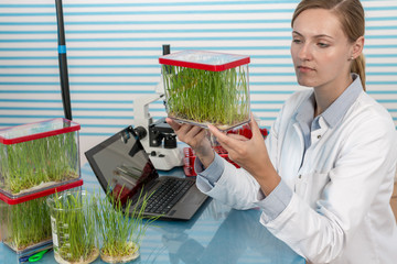 Fototapete - scientist with green plant in modern laboratory. woman study of genetic modified GMO plants in the laboratory