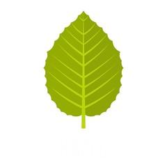 Hazel leaf icon. Flat illustration of hazel leaf vector icon isolated on white background