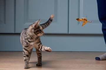 Boy is playing with kitten. Cat is chasing ribbon with bow.