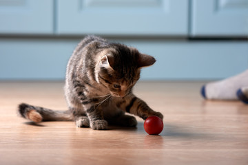 Kitten is plaing with red orb.