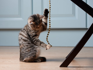 Kitten is playing with string of beads.
