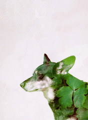 Film double exposure of green leaves and dog bathing in sunshine