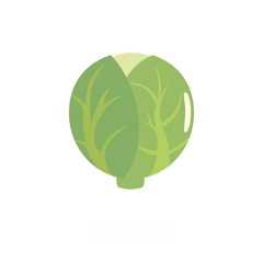 Cabbage icon. Flat illustration of cabbage vector icon isolated on white background