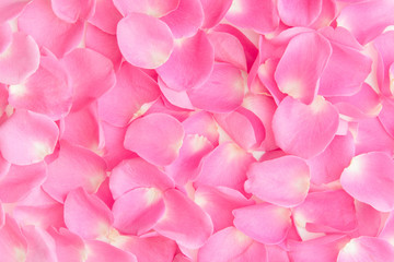 Pink rose petal background