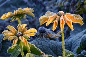 Blumen 887
