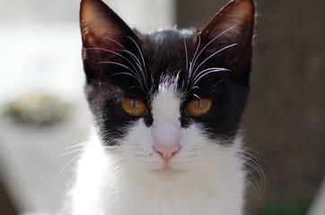猫(白黒)