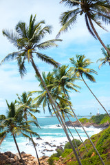 long thin palm trees over the shore of the ocean. colorful asia landscape. tropical plants blue sky