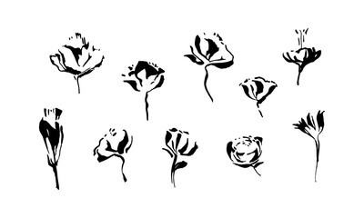Set of hand drawn brush paint flowers painted by ink. Grunge style abstract elements for design. Black isolated vector.