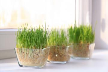 Glass bowls with wheat grass on windowsill