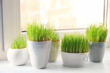 Pots with wheat grass on windowsill