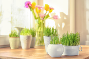 Pots with wheat grass on table near window