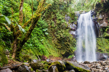 Waterfall in a cloud forest near Boquete, Panama. Accessible by Lost Waterfalls hiking trail.