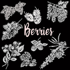Hand drawn sketch style set of different kinds of berries. Vector illustration isolated on black background.