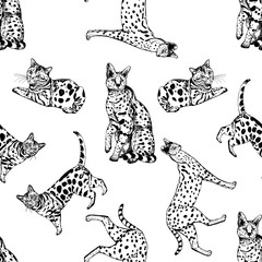Seamless pattern of hand drawn sketch style bengal cats and servals. Vector illustration isolated on white background.